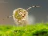 Case-building caddisfly larva (Leptoceridae)