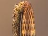 Case-building caddisfly larva (Odontocerum albicorne)