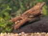 Case-building caddisfly larva (Trichoptera)