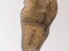 Freshwater flatworm (Dugesia lugubris)