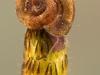 Ramshorn snail (Planorbidae)